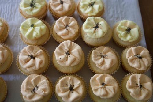 Poppy_cupcakes